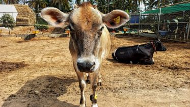 Can Stellapps fix milk for India?