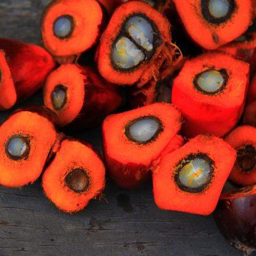 India's palm oil quandary